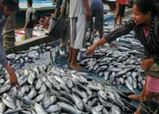 Fish market at Sendang Biru - south of Malang city