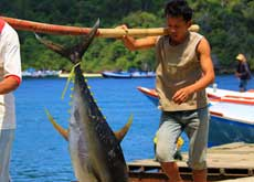 Fishermen carry one big fish - Sendang Biru village in East Java