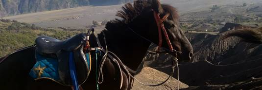 Local transport: visit Bromo by horse - Smartine Indonesia Travel 2020, East Java