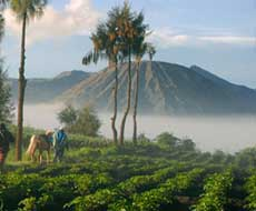 Farmer Bromo area - East Java